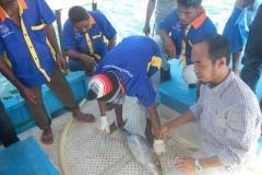 Tuna-Handling-Morotai