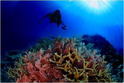 Pengaruh Sea Level Rise Terhadap Ekosistem Terumbu Karang
