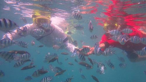 Ujicoba Pelatihan Pengambilan Data Biofisik Bawah Air di Karimunjawa